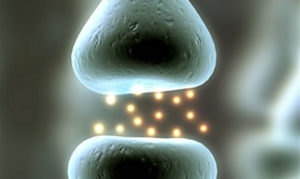 synapseveiw