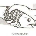 vidipojatii1